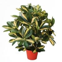 Plante artificiel, shefflera baby 18''