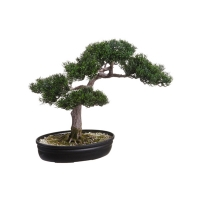 Bonsai de cèdre 16''