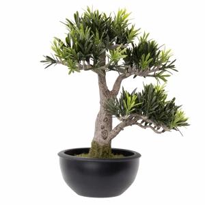 Bonsai podocarpus en pot 13''
