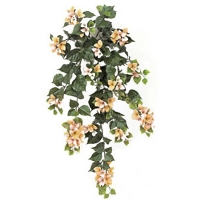 Peach outdoor bougainvillea 3 feet