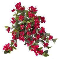 Exterior red bougainvillea hanging bush