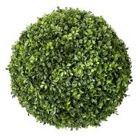 20'' Round English Boxwood