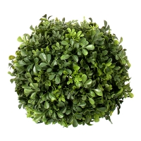 9'' Round English Boxwood