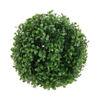 Boxwood ball, int./ext. 10''