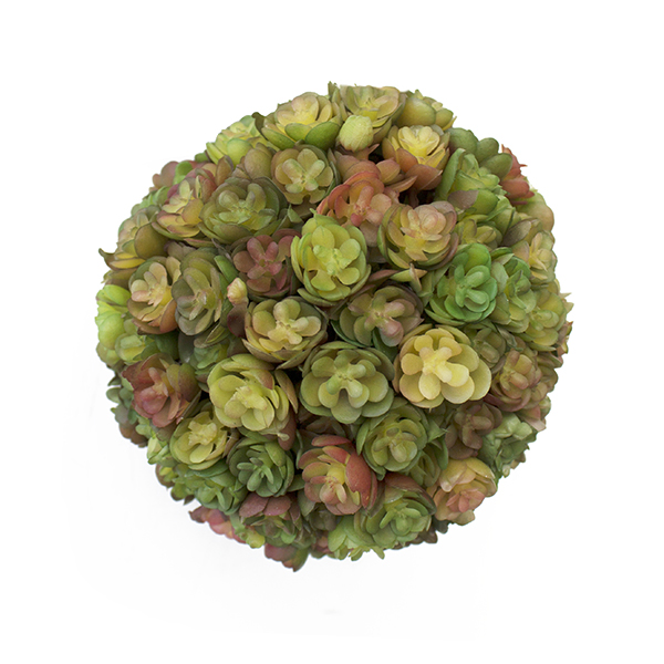 plante grasse boule