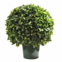 20'' Ficus ball in a pot, int./ext., garantie 2 ans