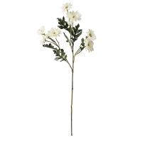 Bouquet de marguerites blanches 25''