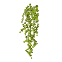 Bouquet of Small Green Hanging Succulents, 22''