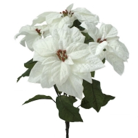 Bouquet de poinsettias blancs 21''