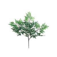 Branche d'aralia 21''
