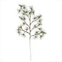 Butte pine branch, 31''