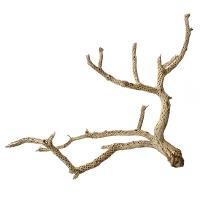 Branche de cactus séché 18-23''