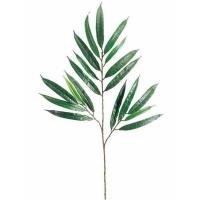 Branche de ficus 19F/26''