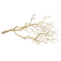 Ghostwood branch 5'