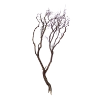 Branche de manzanita 60'', naturel