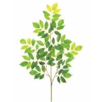 Branche de moutain ash 27''