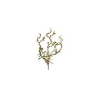 Branches torsadées avec baies crèmes 24''