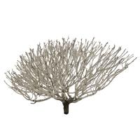 Buisson corail 19-24''
