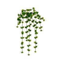 Buisson de plantes grasses retombant 20''