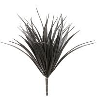 Buisson d'herbe vanille noire, 12''