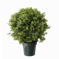 Basil bush in pot, int./ext. 2.5 feet, 2 years warranty