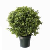 Buisson de basilic en pot, int./ext. 30'', garantie 2 ans