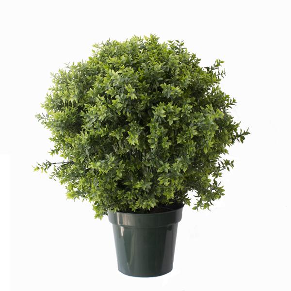 buisson de basilic en pot int ext 30 garantie 2 ans