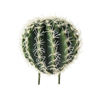 Barrel Cactus Stem, 6''