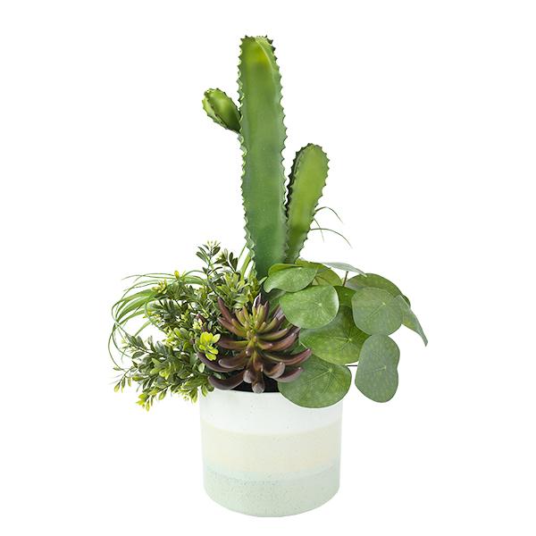 cactus et succulentes en pot d cors v ronneau. Black Bedroom Furniture Sets. Home Design Ideas
