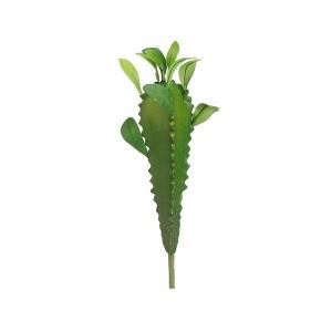 Cactus madagascar 13''