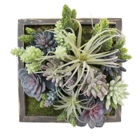 Framed Succulent Arrangement
