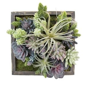 Cadre végétal, plantes grasses