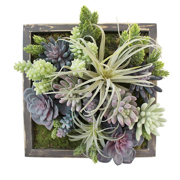 cadre v g tal plantes grasses d cors v ronneau. Black Bedroom Furniture Sets. Home Design Ideas