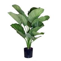 Plante artificielle, calathea fasciata 31''