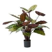 Calathea roseopicta artificiel, 27''