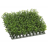 Boxwood square 10 x 10''