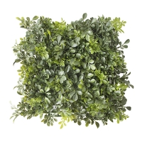 Square English Boxwood, 10''