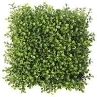 10'' Boxwood Square