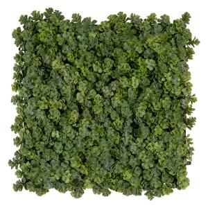 Carré de plantes grasses, 10''