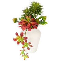 Colorful Succulents in Vase