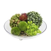 Centre de table avec plantes grasses 14''