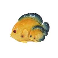 Couple de poisson exotique jaune et bleu 5,7x2,6x4,5''