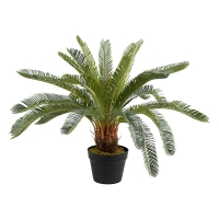 Potted Cycas Plant, 27''