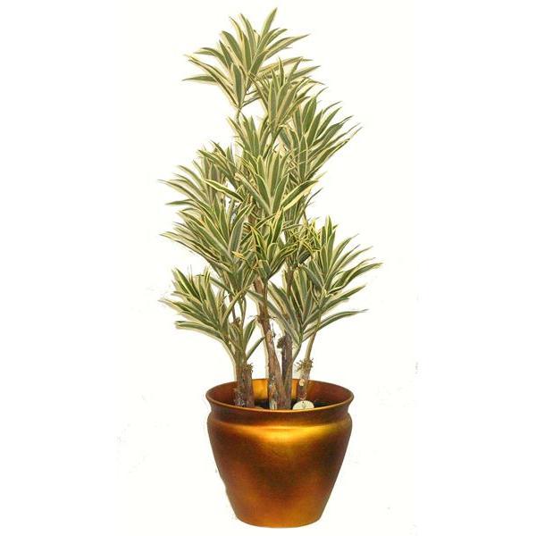 Plante dracaena 3 39 d cors v ronneau for Accessoire plante interieur