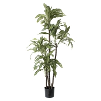Artificial plant, 5' draceana fragans