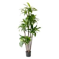 Plante Artificielle, draceana fragans 6'