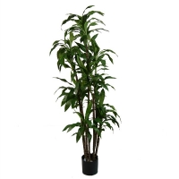 Artificial plant, 6' dracaena fragrans