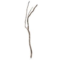 Branche de dragon wood de 6 à 8'
