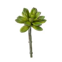 Echeveria artificiel vert