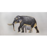 Éléphant avec touche dorée 30 x 60''